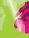 Kiss Enikő üzleti tanácsadó, coach logo